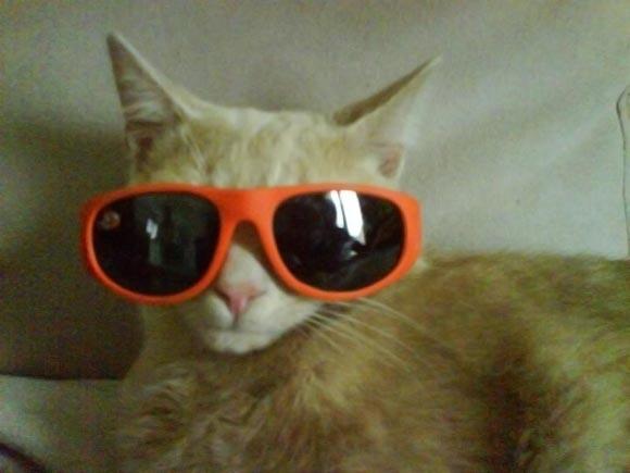 Tigrou à lunettes
